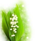 Blumenstraußmaiglöckchen Stockbild