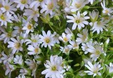 Blumenstraußmusterprimelnahaufnahmefarbblüht blühender Blattwald makro gelbe Blumenwiesenblumenblattgrasblüten-Blütenflora w Lizenzfreies Stockbild