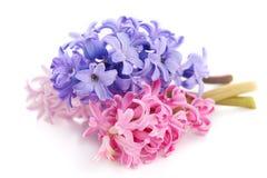 Blumenstraußveilchenhyazinthe lizenzfreies stockbild