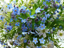 Blumenstraußwald blüht Blütenschönheits-Florablau des Blumenjahreszeitblattbotaniknahaufnahmegrassommers der weißen Blume des mus Stockfoto