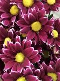 Blumenstrauß der purpurroten Blumen stockfotografie