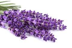 Blumenstrauß des Lavendels stockbild