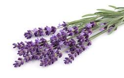 Blumenstrauß des Lavendels stockfotografie