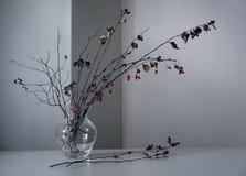 Blumenstrauß einer Berberitzenbeerniederlassung mit den trockenen Zweigen stockfoto