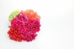 Blumenstrau? der Gartennelke in einem wei?en Hintergrund stockbilder