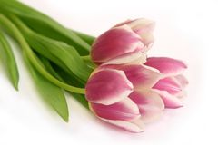 Blumenstrauß der rosafarbenen Tulpen Stockbilder