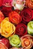Blumenstrauß der Rosen Stockbilder