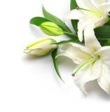 Blumenstrauß der weißen Lilien Stockbild