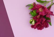Blumenstrau? von Blumen von gelbem und purpurrotem Alstromeria auf einem purpurroten Hintergrund lizenzfreie stockfotografie