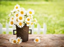 Blumenstrauß von Gänseblümchenblumen Stockfotografie
