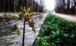 Blumenstrom Lizenzfreie Stockbilder