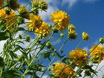 Blumensymphonie Stockbild