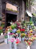 Blumensystem Stockfotografie