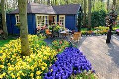 Blumensystem in den Keukenhof Gärten Stockbild