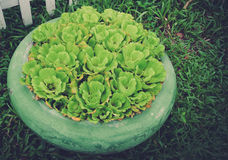 Blumentöpfe Stockfoto
