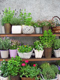 Blumentöpfe Lizenzfreie Stockfotografie