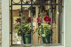 Blumentöpfe auf altem Fenster Stockbild
