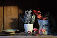 Blumentöpfe auf einem hölzernen Regal Lizenzfreie Stockfotografie