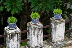 Blumentöpfe Bonsais in der Reihe Stockbilder