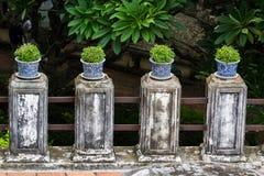 Blumentöpfe Bonsais in der Reihe Lizenzfreies Stockfoto