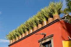 Blumentöpfe, die Dachspitze in Mexiko verzieren lizenzfreies stockfoto