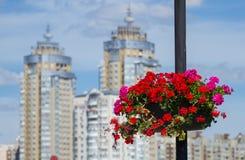 Blumentöpfe in Kiew Stockfotografie
