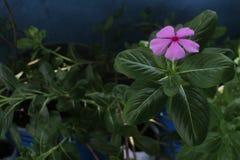 Blumentöpfe und -blätter Lizenzfreie Stockfotos