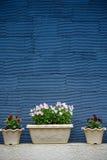 Blumentöpfe und blaue gestreifte Beschaffenheitswand Lizenzfreie Stockfotografie