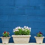 Blumentöpfe und blaue gestreifte Beschaffenheitswand Lizenzfreie Stockbilder