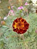 Blumentageszeit Stockfotos