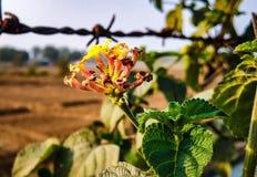 Blumentapete, schöne Blume und Szene lizenzfreies stockbild