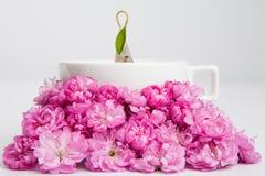 Blumentee Stockbild