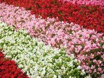 Blumenteppich Stockbilder