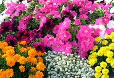 Blumenteppich. Stockbilder