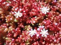 Blumenteppich stockbild