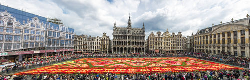 Blumenteppich 2014 in Brüssel Stockfoto
