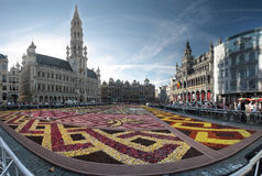 Blumenteppich in Brüssel, Belgien Stockbild