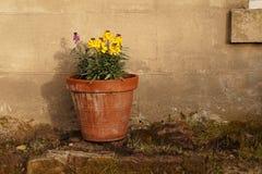 Blumentopf Stockbild