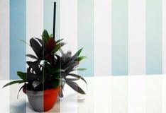 Blumentopf, Abstraktion Lizenzfreies Stockbild