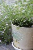 Blumentopf auf dem Hintergrund Lizenzfreie Stockfotografie