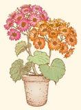 Blumentopf auf dem Hintergrund stock abbildung