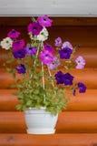 Blumentopf auf dem Hintergrund Stockbild