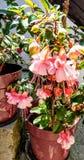 Blumentopf auf dem Hintergrund Stockfotografie