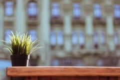 Blumentopf auf h?lzerner Tabelle lizenzfreie stockfotos