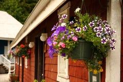 Blumentopf in der Fernschreiber-Bucht BC Kanada Lizenzfreie Stockbilder