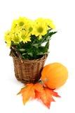 Blumentopf der gelben Chrysantheme blüht mit Herbstdekoration Lizenzfreie Stockfotos
