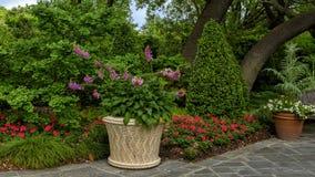 Blumentopf mit Fingerhuten und Betten mit roten Pelargonien Dallas Arboretum und botanischem Garten stockfotografie