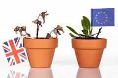 Blumentopf mit verschiedenen Flaggen, Konzeptauswirkungen des brexit Lizenzfreie Stockfotografie
