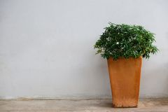 Blumentopf neben schmutziger Wand stockfotos