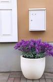 Blumentopf und -briefkasten Lizenzfreie Stockfotos